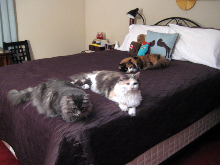 Kitties on bed